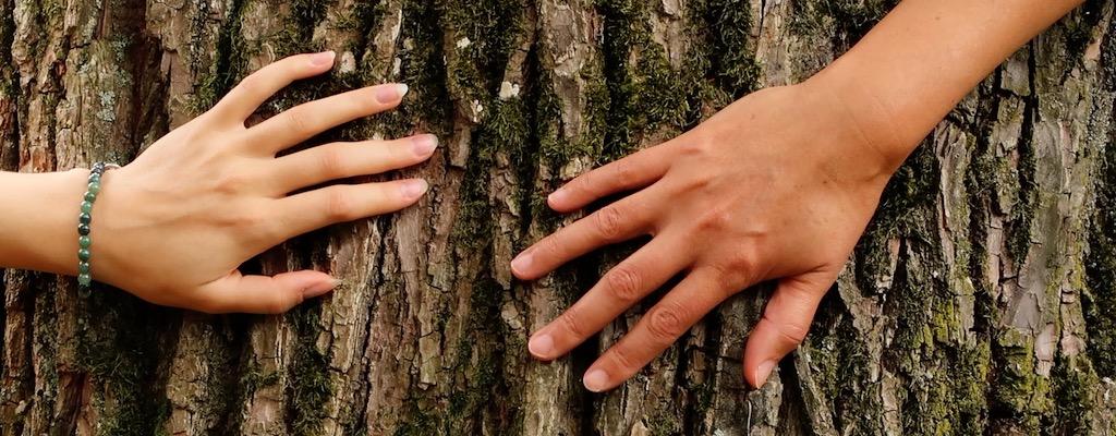 Von Tree Huggers und Co. oder warum Bäume umarmen eigentlich cool ist.